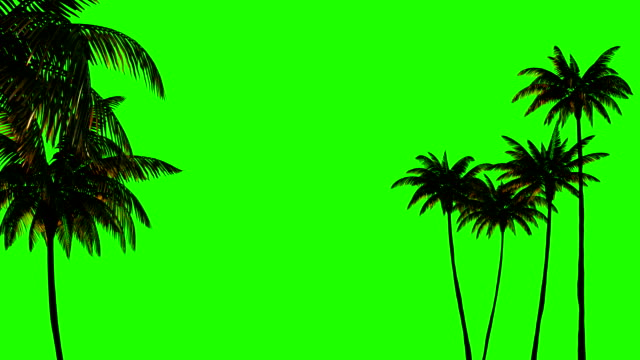 3d animation for keying, three palm trees on a green chromakey