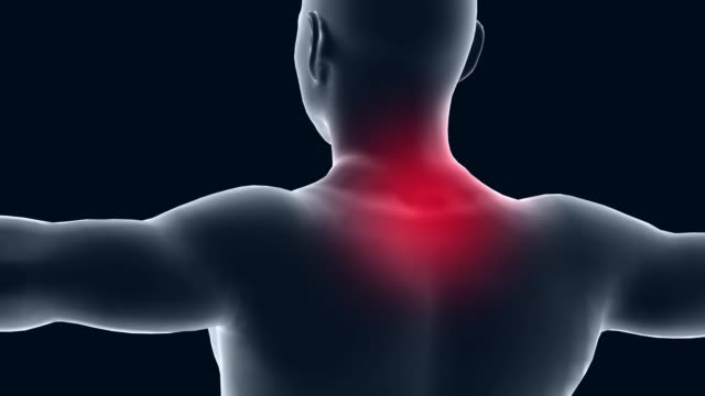 vídeos de stock e filmes b-roll de 3d animation human body, healthcare and medical topics. focus on cervical and neck. - pescoço
