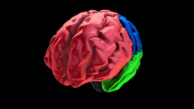 Royalty free cerebrum hd video 4k stock footage b roll istock 3d animation of the various colored parts of the brain frontal lobe video ccuart Gallery