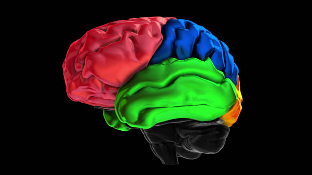 Royalty free cerebrum hd video 4k stock footage b roll istock 3d animation of the various colored parts of the brain temporal lobe video ccuart Gallery