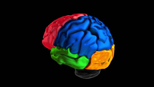 3d animation of the various colored parts of the brain Human Brain Atlas physiology stock videos & royalty-free footage