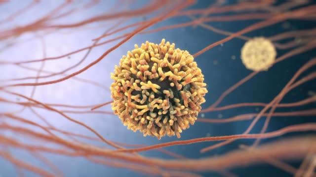 vídeos de stock, filmes e b-roll de animação 3d de glóbulos brancos também chamados leucócitos ou leucócito - hiv