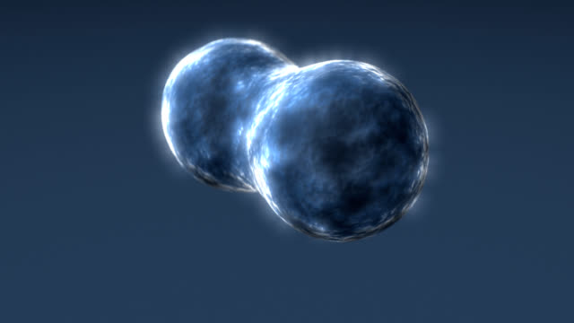3d rendered bacteria cells in mitosis video