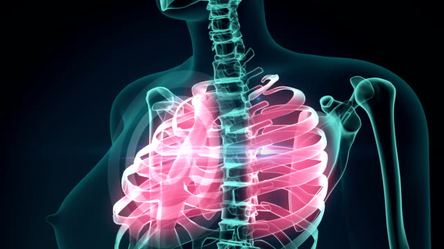 3d rendered illustration of a painful rib. medical concept animation. - torace animale video stock e b–roll