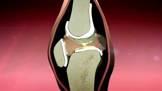 3d rendered knee illustration video