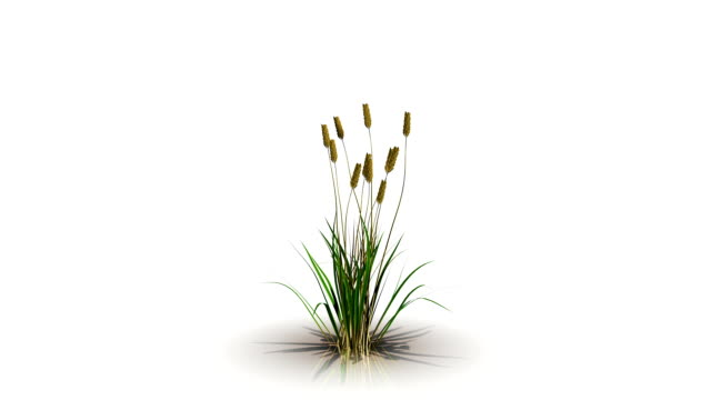 3d rendering of a flower growth
