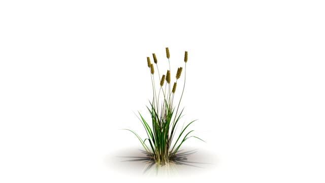 花の成長の 3 d レンダリング ビデオ