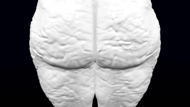3 d の女のお尻は重量を得、重量を失います。 - 体への関心点の映像素材/bロール
