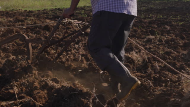 3-Man Farmer Cultivating Land Plowing The Soil With Ox video