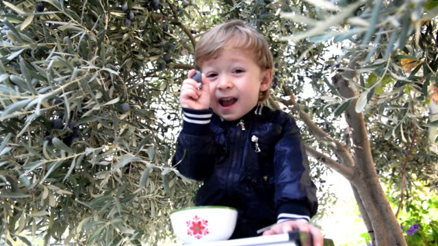 3-year-old boy picking olives video