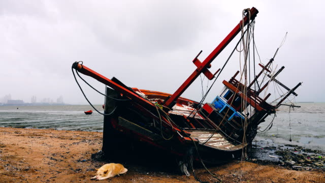 4k: abandoned old fishing boat decaying on the beach - кораблекрушение стоковые видео и кадры b-roll