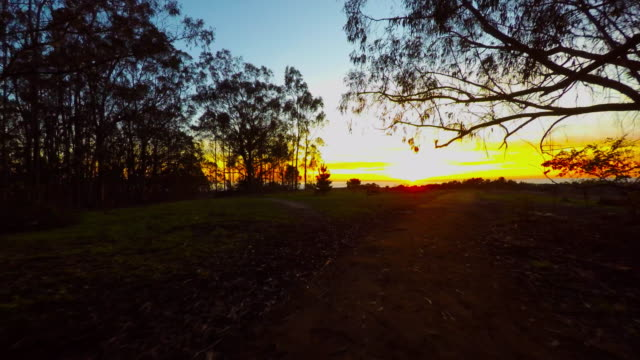 4k aerial moving birds eye point of view flying through silhouetted trees toward sunset looking at pacific ocean on colorful Northern California hilltop video