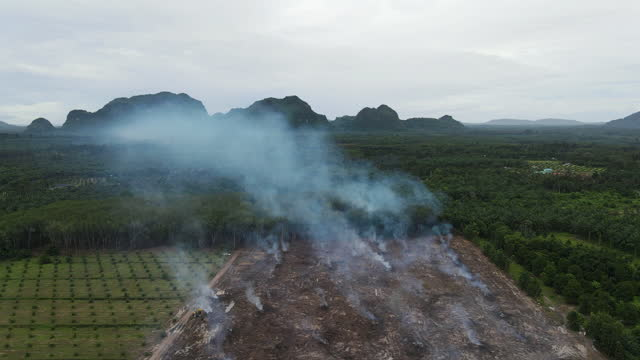 4k aerial top view circular pan of Clear cutting and fire forest and smoke for agriculture field