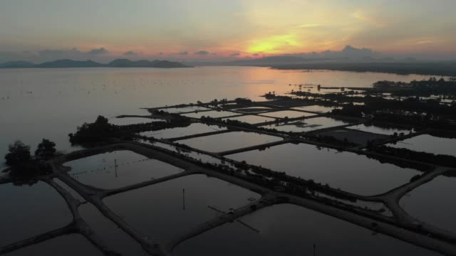 vídeos de stock e filmes b-roll de 4k aerial view and dolly shot of fish farming in the lake. - aquacultura