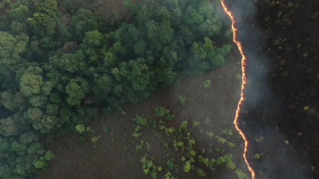 4k aerial view and lockdown of forest fire.