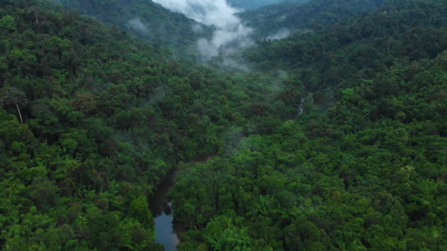 4k aerial view and tilt up of misty tropical rainforest at khao sok national park. - obficie ulistniony filmów i materiałów b-roll