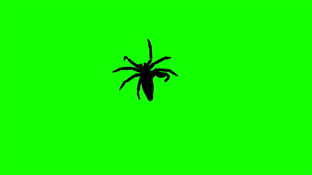 4k animation - Spiders Creepy Crawling on Green Screen Background