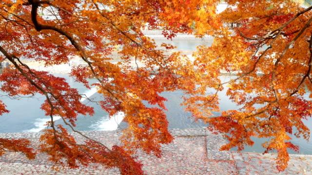 4k Beautiful Autumn Colors in Japan video