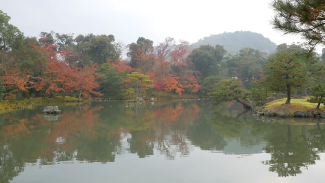 4k Beautiful Japanese garden with a pond and red leaves
