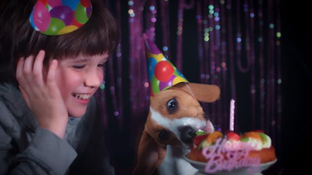 4k Birthday Beagle Dog Eating Cake with Boy video