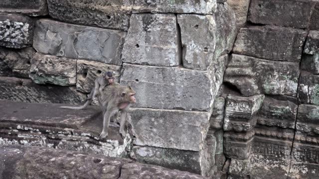 vídeos de stock, filmes e b-roll de 4k, mãe cambojana do macaco com seu filho na parede velha angkor thom bayon da ruína - relevo