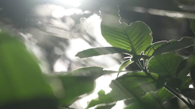 4 k は、森の中に落ちる太陽の光のショットを閉じます。 - 木漏れ日点の映像素材/bロール