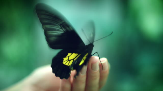4k Close-up Butterfly Flapping Wings Fast video