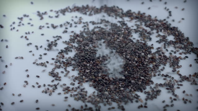 4k Close-up Shot of Chia Seeds Falling in Plate video