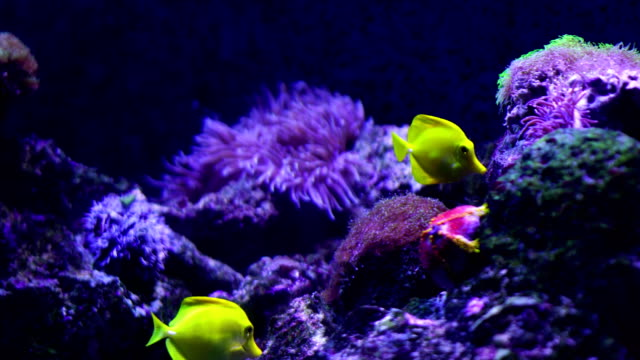 4k coral colony on the reef - under the sea fish video stock e b–roll