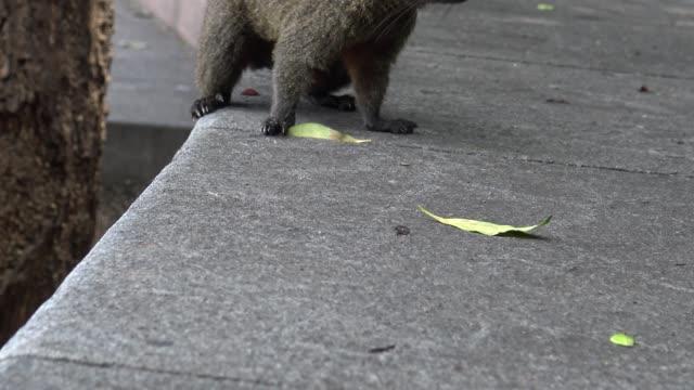 4k, Cute Pallas's squirrel is seraching food in a park of Taipei city