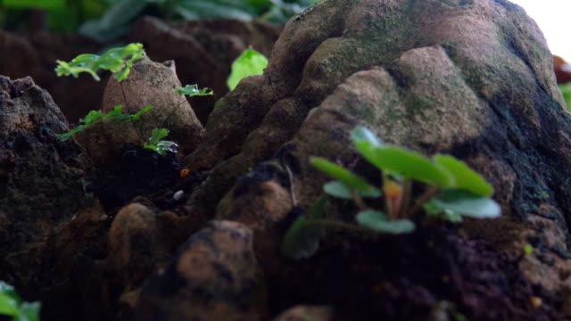 4 k 돌리 샷: 자연 그린 - 10초 이상 스톡 비디오 및 b-롤 화면