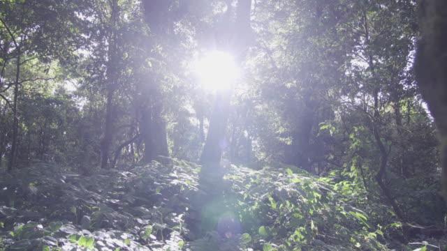 日光の森を通って落下の 4 k ドリー ショット。 - 木漏れ日点の映像素材/bロール