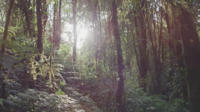 4k dolly shot ,tropical rain forest nature trail - albero tropicale video stock e b–roll