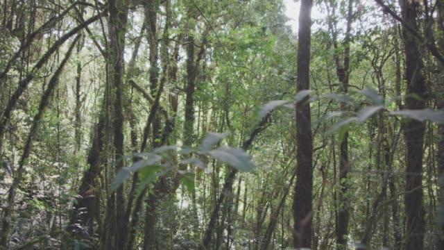 4k dolly shot ,Tropical Rain Forest trail - video