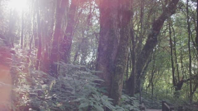 4 k Dolly Schuss, tropischen Regenwald trail – Video