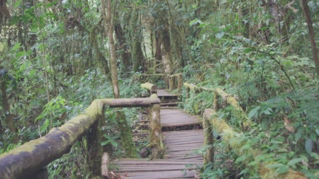 4k dolly shot ,Walk along a rainforest trail - vídeo