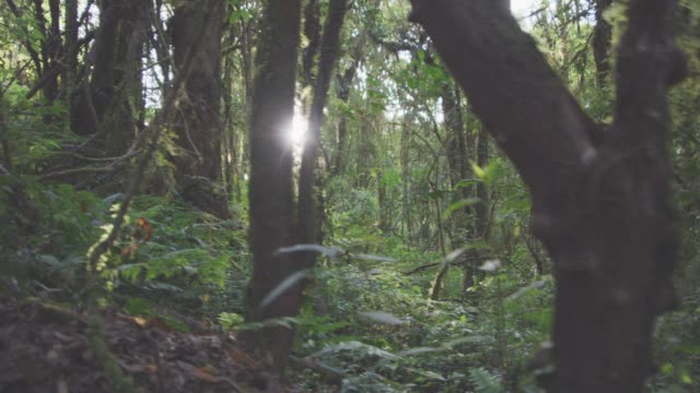 4k dolly shot,summer rain forest nature trail video