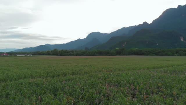 vídeos de stock e filmes b-roll de 4k drone shot , spring time, rice paddy field and mountain cloudy sky, asia landscape - coreia do sul