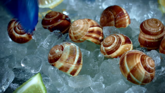4k Fish and Seafood on Ice, Dolly of Escargots video