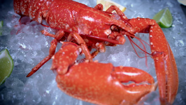 4k Fish and Seafood on Ice, Dolly of Lobster video