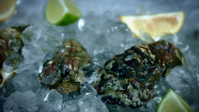 4k Fish and Seafood on Ice, Dolly of Oysters video