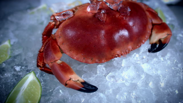 4k Fish and Seafood on Ice, Dolly of Red Crab video
