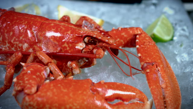 4k Fish and Seafood on Ice, Dolly of Red Lobster video