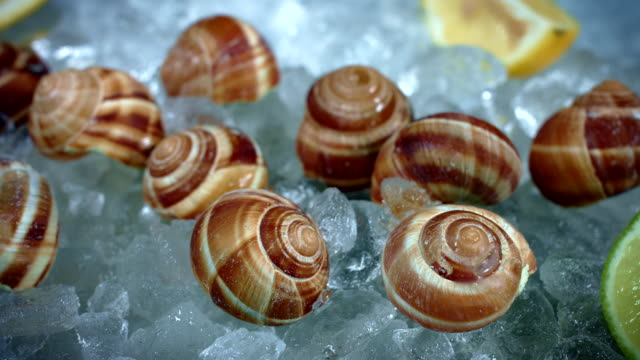 4k Fish and Seafood on Ice, Dolly of Snails video