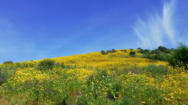 4k Flower field and sunny sky video