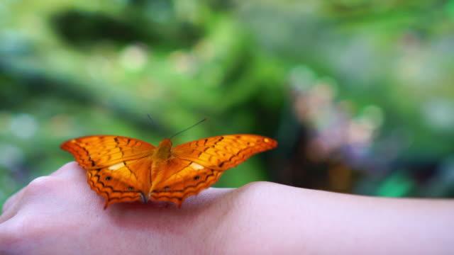stockvideo's en b-roll-footage met 4k beeldmateriaal scène van oranje vlinder flappen vleugels op vrouw terug hand in het bos, diergedrag en natuurlijke concept - vrouwtjesdier