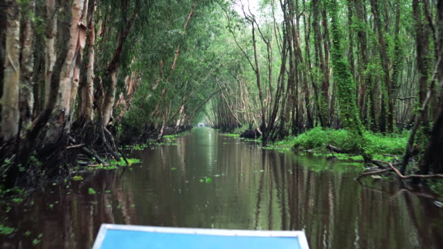 4k footage scene of Traveling Tra Su Cajuput Forest bird sanctuary in the Mekong Delta, Tinh Bien District, An Giang Province, in Southern Vietnam Footage scene of Traveling Tra Su Cajuput Forest bird sanctuary in the Mekong Delta, Tinh Bien District, An Giang Province, in Southern Vietnam, 4k clip duckweed stock videos & royalty-free footage