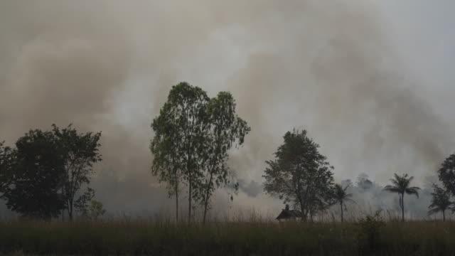 4k forest fire eller svedjebruk jordbruk koncept. - skog brand bildbanksvideor och videomaterial från bakom kulisserna