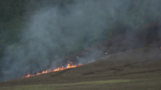 4k forest fire or slash and burn agriculture concept. - clima video stock e b–roll