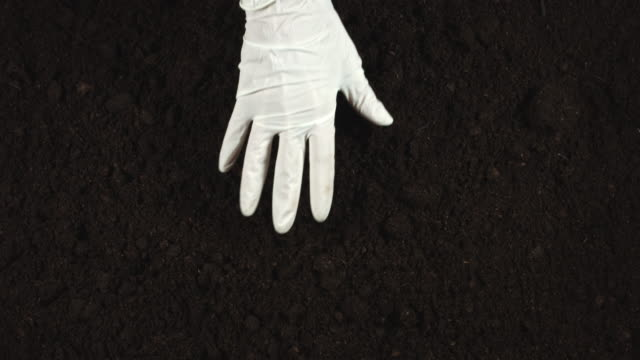 4k gardening composition of hands in glove examining soil - semenzaio video stock e b–roll